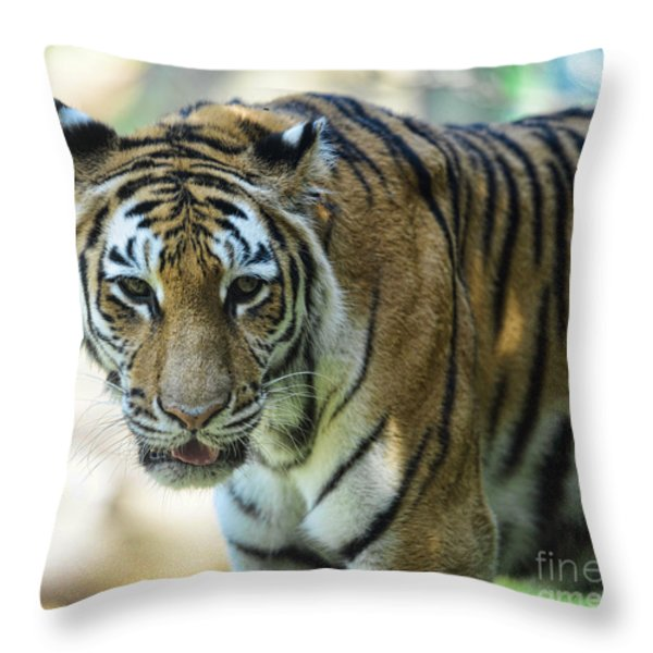 Tiger - Endangered - Wildlife Rescue Throw Pillow by Paul Ward