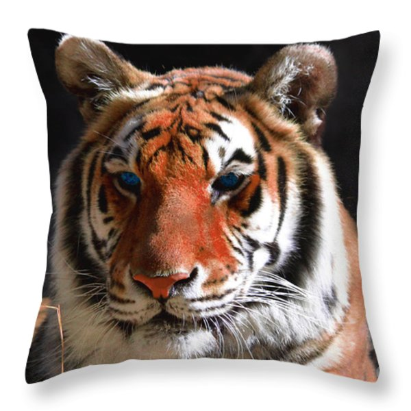 Tiger Blue Eyes Throw Pillow by Rebecca Margraf