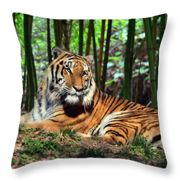 Tiger Rest And Bamboo Throw Pillow by Sandi OReilly
