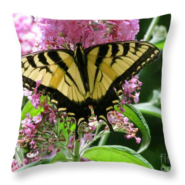 Tiger Swallowtail Butterfly Throw Pillow by Randi Shenkman
