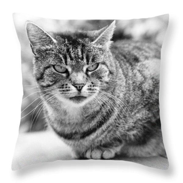 Tomcat Throw Pillow by Frank Tschakert