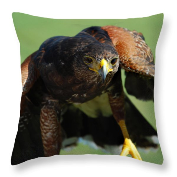 Top Raptor Throw Pillow by Skip Willits