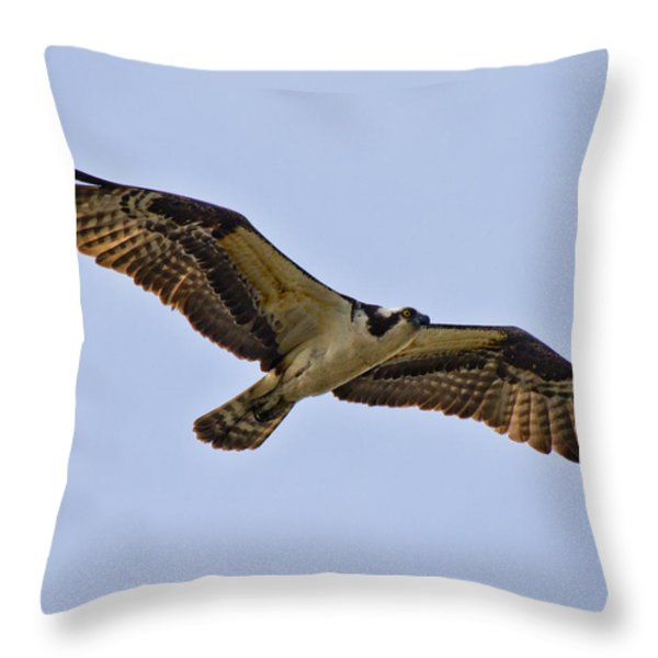 Topsail Osprey Throw Pillow by Betsy A  Cutler