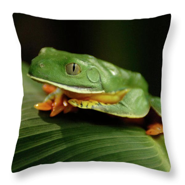 Tree Frog 1 Throw Pillow by Bob Christopher