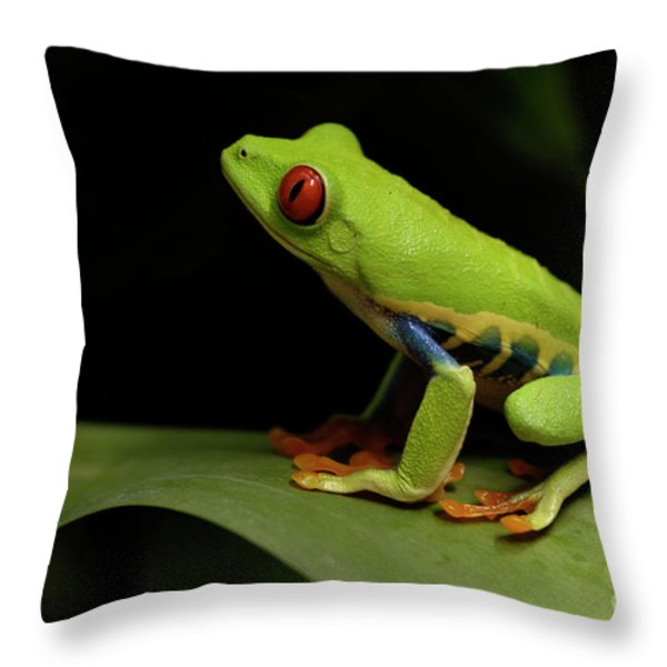 Tree Frog 14 Throw Pillow by Bob Christopher
