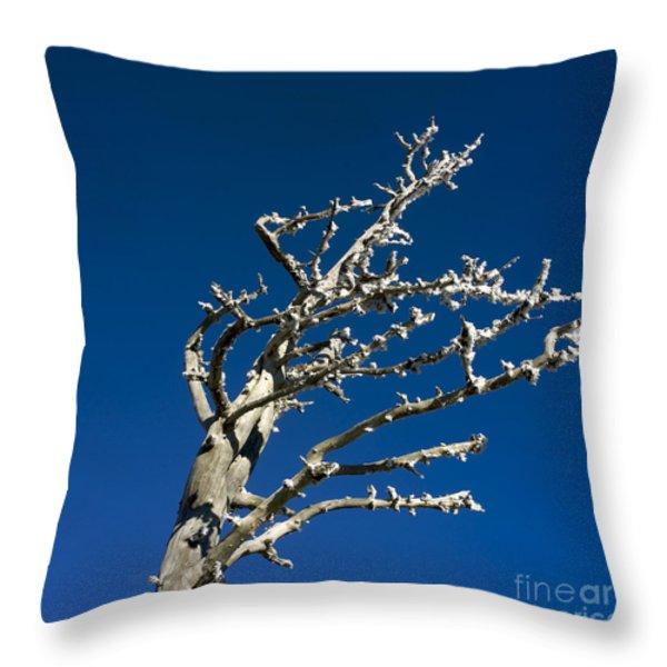 Tree In Winter Against A Blue Sky Throw Pillow by Bernard Jaubert