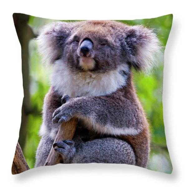 Treetop Koala Throw Pillow by Mike  Dawson