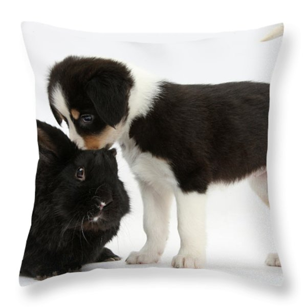 Tricolor Border Collie Pup With Black Throw Pillow by Mark Taylor