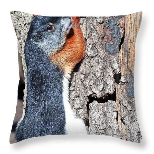 Tricolored Squirrel Throw Pillow by Kenneth Albin