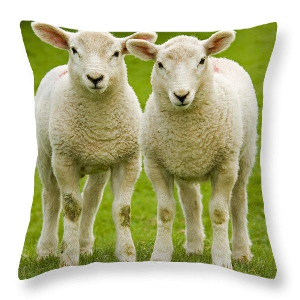 twin lambs Throw Pillow by Meirion Matthias