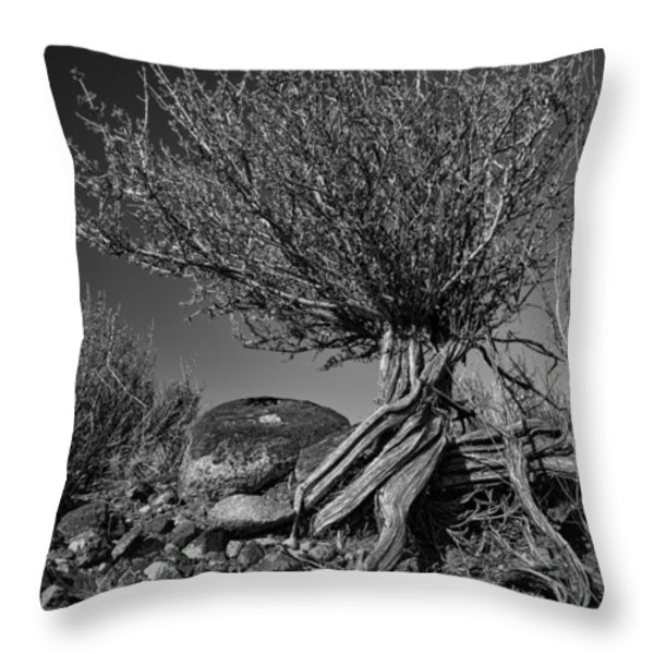 Twisted Beauty - Bw Throw Pillow by Christopher Holmes