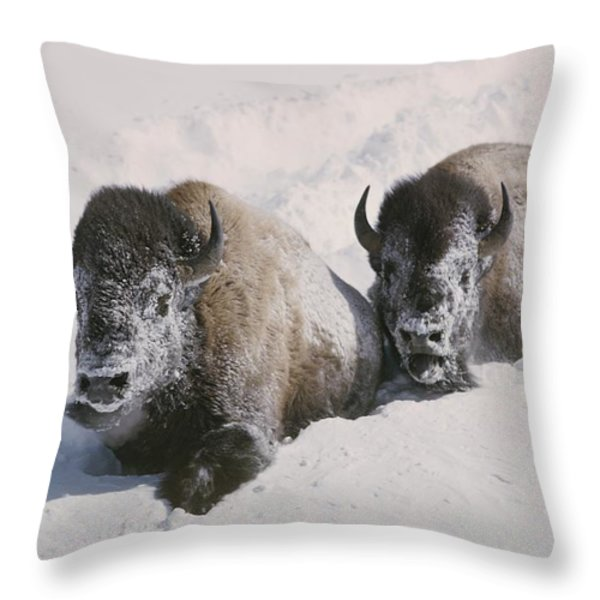 Two Bison Move Through Chest-deep Snow Throw Pillow by William Albert Allard