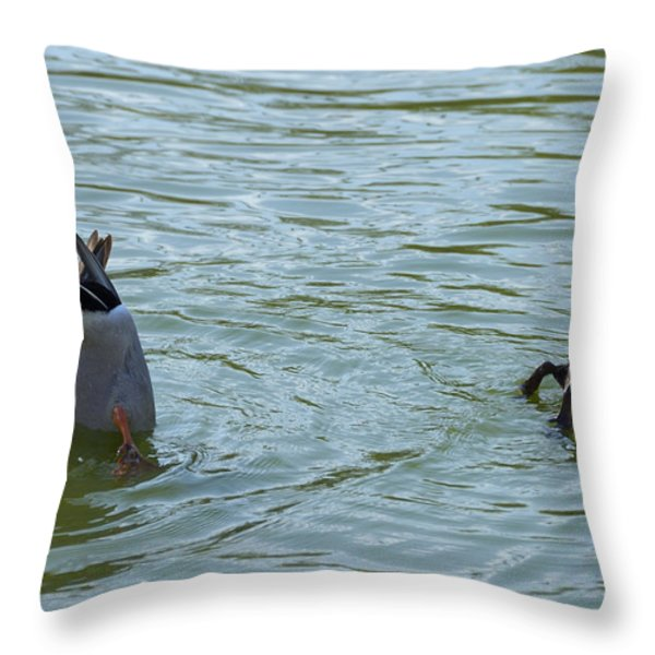 Two ducks diving Throw Pillow by Matthias Hauser