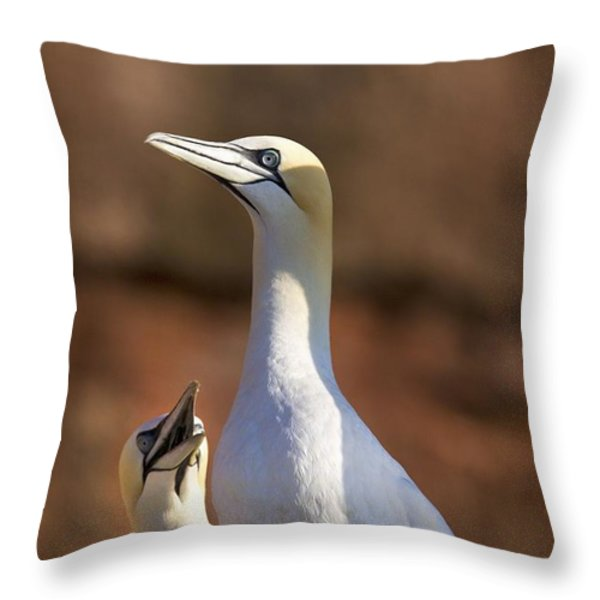 Two Gannets Interacting Perce, Quebec Throw Pillow by Richard Wear