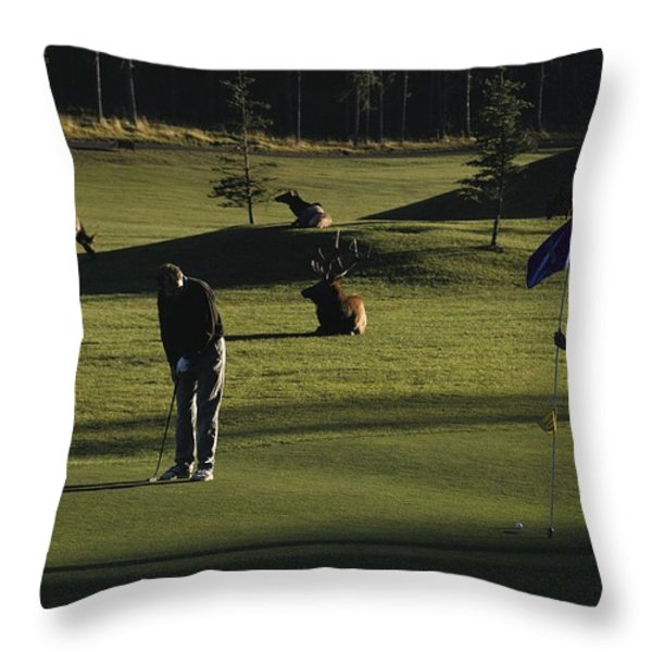 Two People Play Golf While Elk Graze Throw Pillow by Raymond Gehman