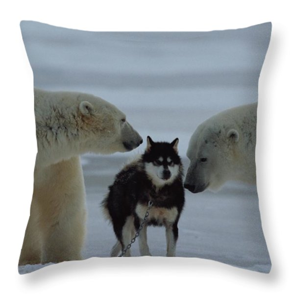 Two Polar Bears Ursus Maritimus Sniff Throw Pillow by Norbert Rosing