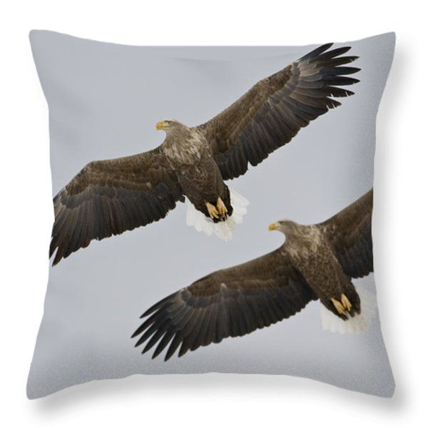 Two White-tailed Eagles In Flight Side Throw Pillow by Roy Toft