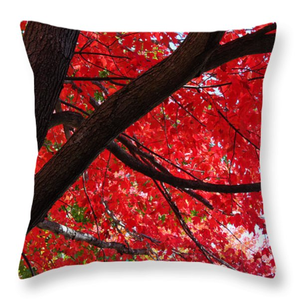 Under the Reds Throw Pillow by Rachel Cohen