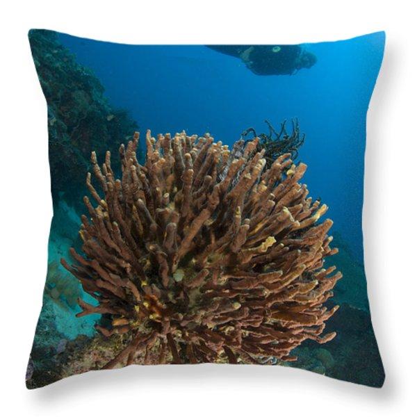 Unidentified Species Of Sponge Throw Pillow by Steve Jones