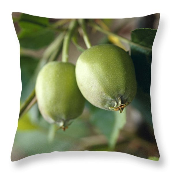 Unripe Royal Gala Apples Growing Throw Pillow by Jason Edwards