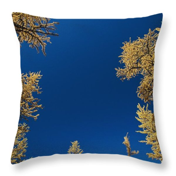 Upward View Of Blue Sky And Conifer Throw Pillow by Raymond Gehman