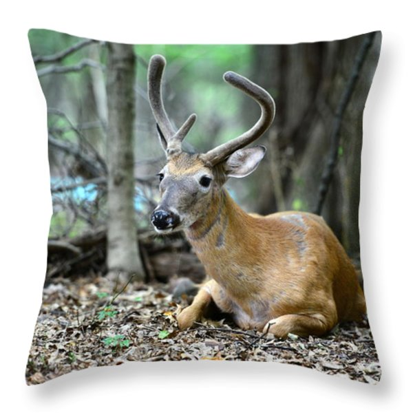 Velvet Buck at rest  Throw Pillow by Paul Ward