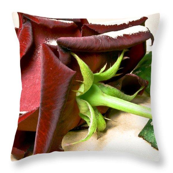 Velvet Rose Throw Pillow by Svetlana Sewell