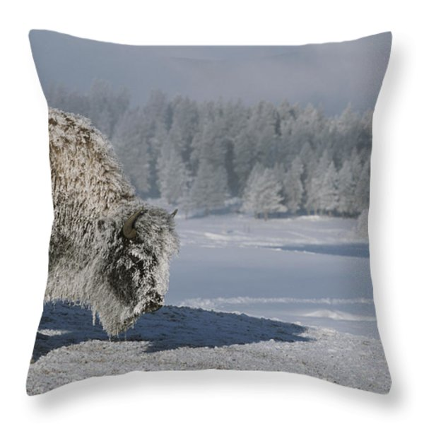 View Of An Ice-encrusted American Bison Throw Pillow by Tom Murphy