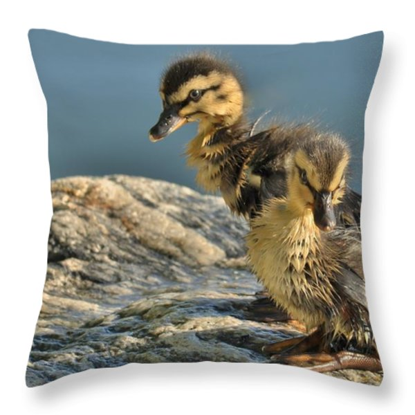 Waiting For Momma Throw Pillow by Cindy Fullwiler