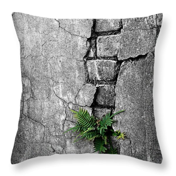 Wall Ferns Throw Pillow by Perry Webster
