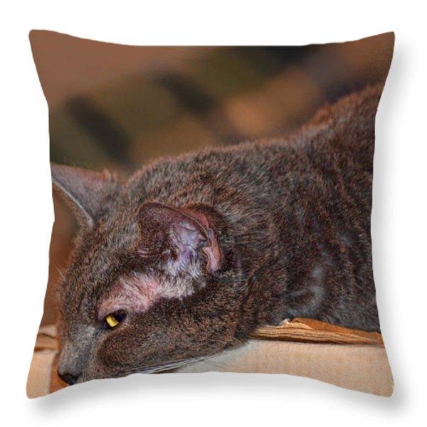 Warm Kitty Iv Throw Pillow by Debbie Portwood