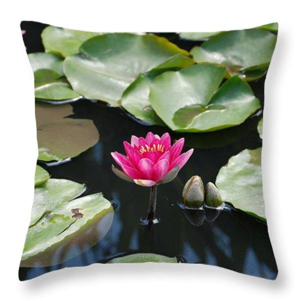 Water Lilies Throw Pillow by Jennifer Lyon