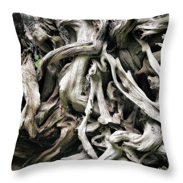 Weathered Roots - Sitka Spruce Tree Hoh Rain Forest Olympic National Park Wa Throw Pillow by Christine Till