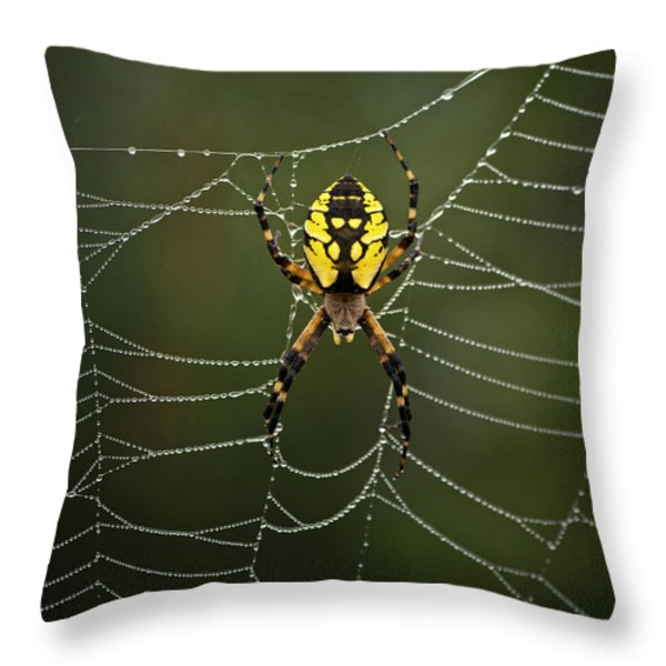 Weave Master Throw Pillow by Susan Capuano
