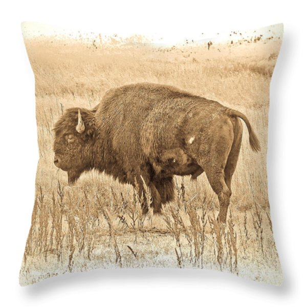 Western Buffalo Throw Pillow by Steve McKinzie