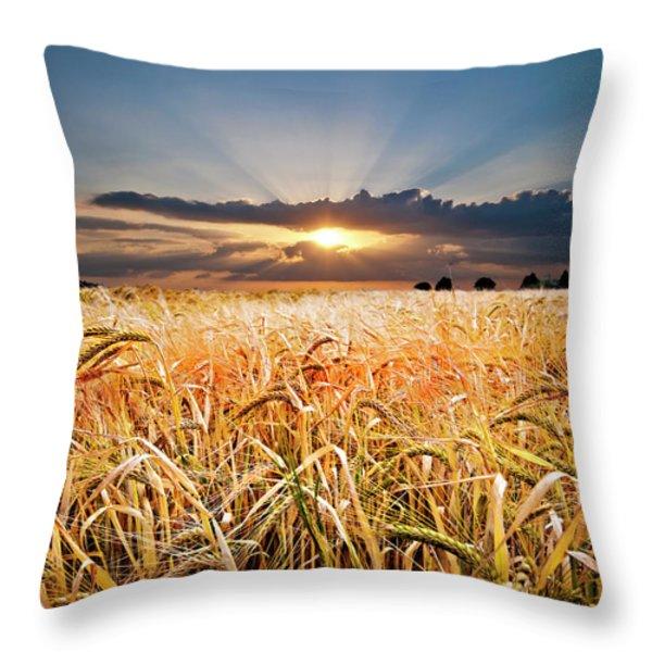 wheat at sunset Throw Pillow by Meirion Matthias