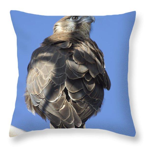 Whistling Kite Throw Pillow by Douglas Barnard
