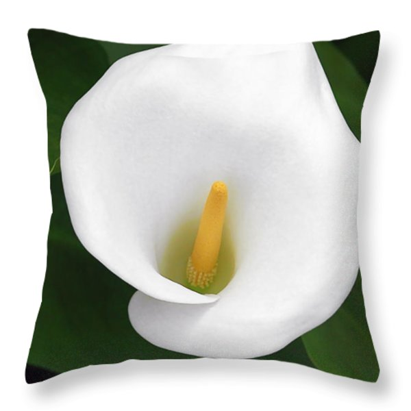 White Calla Lily Throw Pillow by Christine Till
