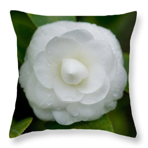 White Camellia Throw Pillow by Rich Franco