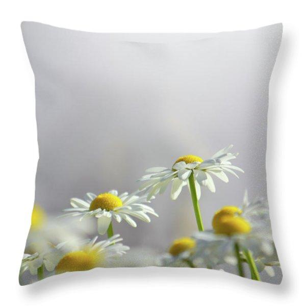 White Daisies Throw Pillow by Carlos Caetano