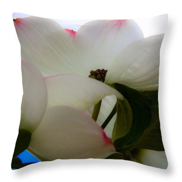 White Dogwood Flower Throw Pillow by David Patterson
