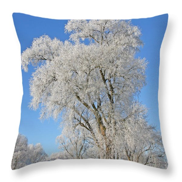 White Frost Tree Throw Pillow by Ralf Kaiser