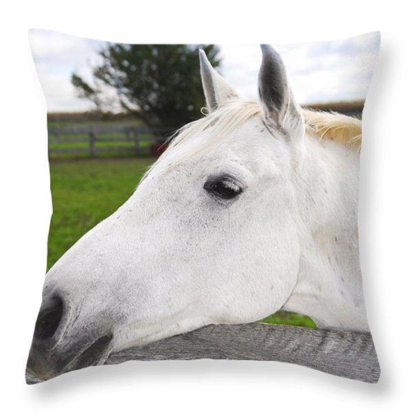 White horse Throw Pillow by Elena Elisseeva