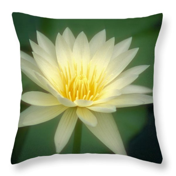 White Lily Throw Pillow by Ron Dahlquist - Printscapes