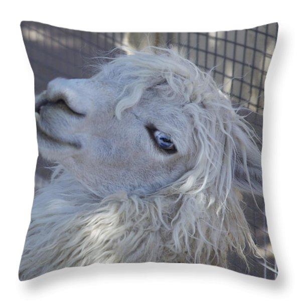 White Llama Throw Pillow by Enzie Shahmiri