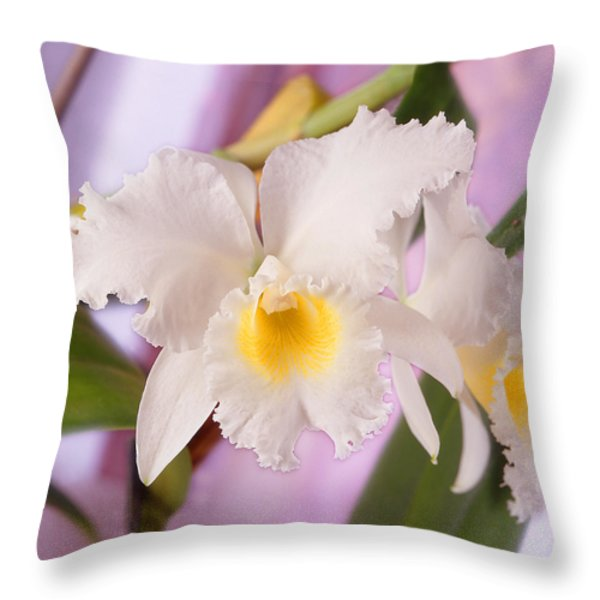 White Orchid Throw Pillow by Mike McGlothlen