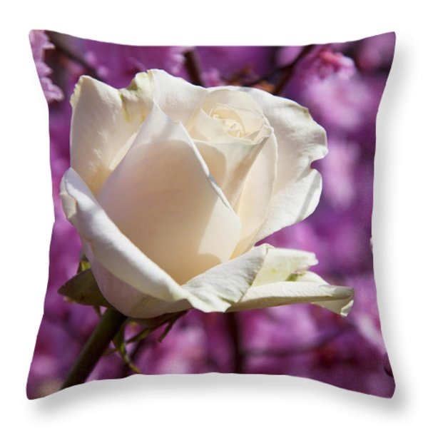 White Rose And Plum Blossoms Throw Pillow by Garry Gay