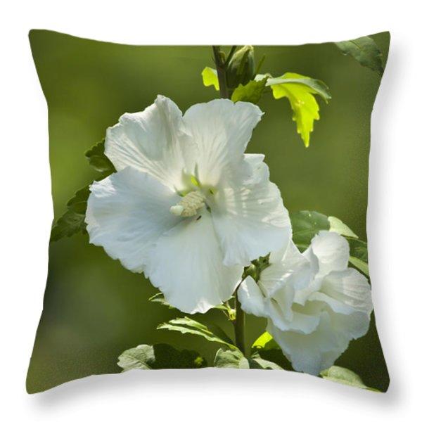 White Rose of Sharon Throw Pillow by Teresa Mucha