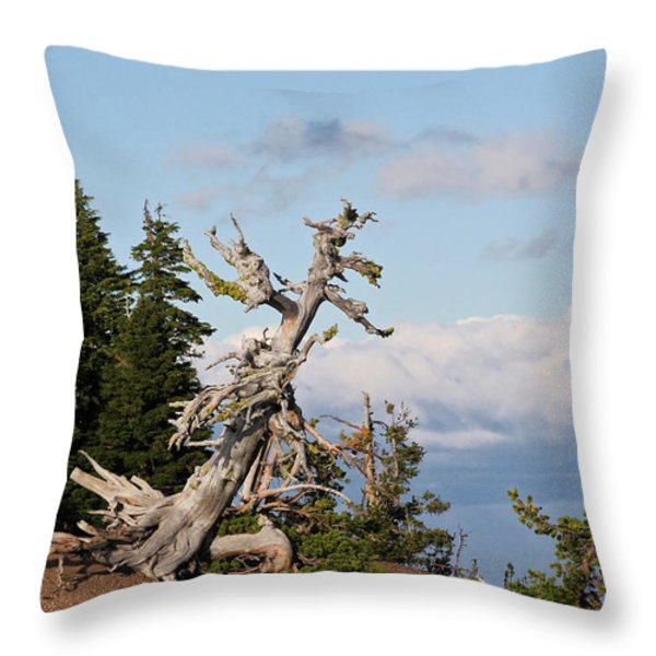 Whitebark Pine at Crater Lake's rim - Oregon Throw Pillow by Christine Till