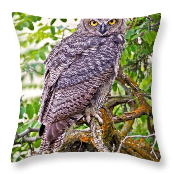 Who Gives A Hoot Throw Pillow by Athena Mckinzie